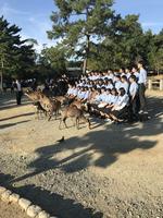 奈良公園ではない囲まれて写真撮影